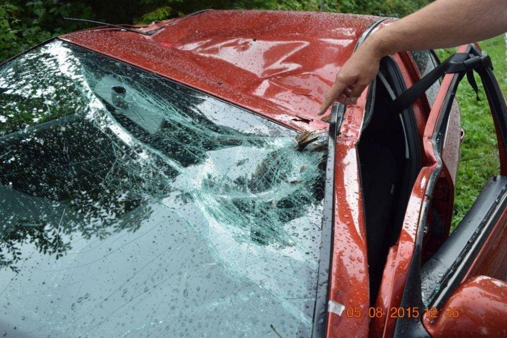 Pri Námestove spadol na auto za jazdy strom, foto 2