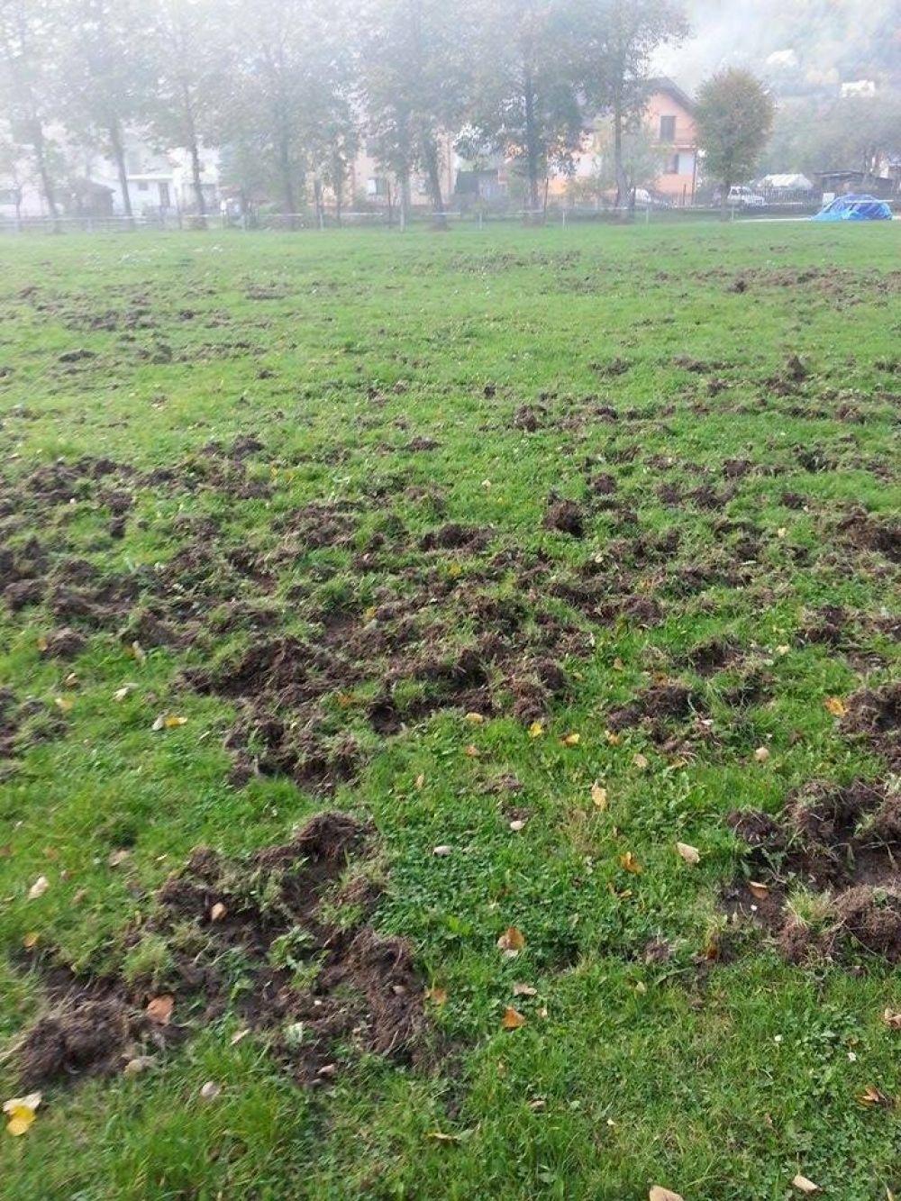 Diviaky zničili futbalové ihrisko v mestskej časti Vranie, foto 3