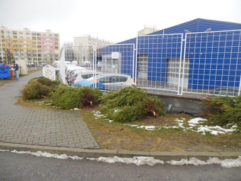 Zrezané stromčeky na ulici Pod Hliniskom, sídlisko Solinky, foto 1