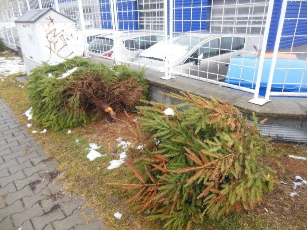 Zrezané stromčeky na ulici Pod Hliniskom, sídlisko Solinky, foto 2