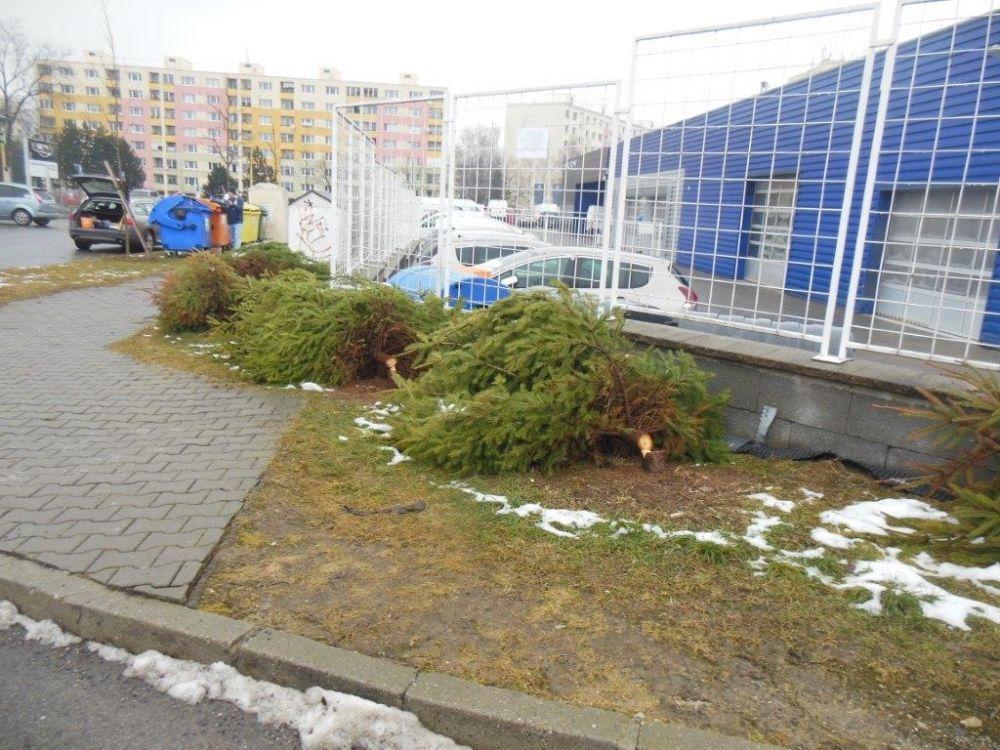 Zrezané stromčeky na ulici Pod Hliniskom, sídlisko Solinky, foto 7