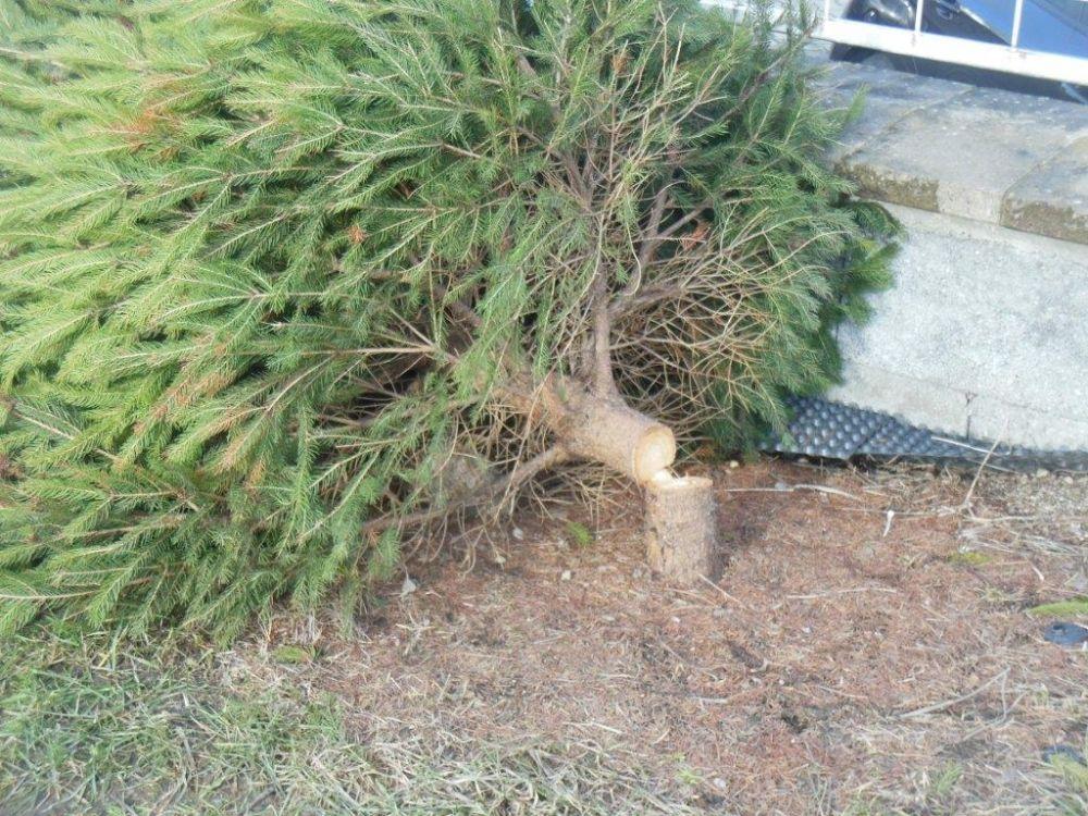 Zrezané stromčeky na ulici Pod Hliniskom, sídlisko Solinky, foto 8
