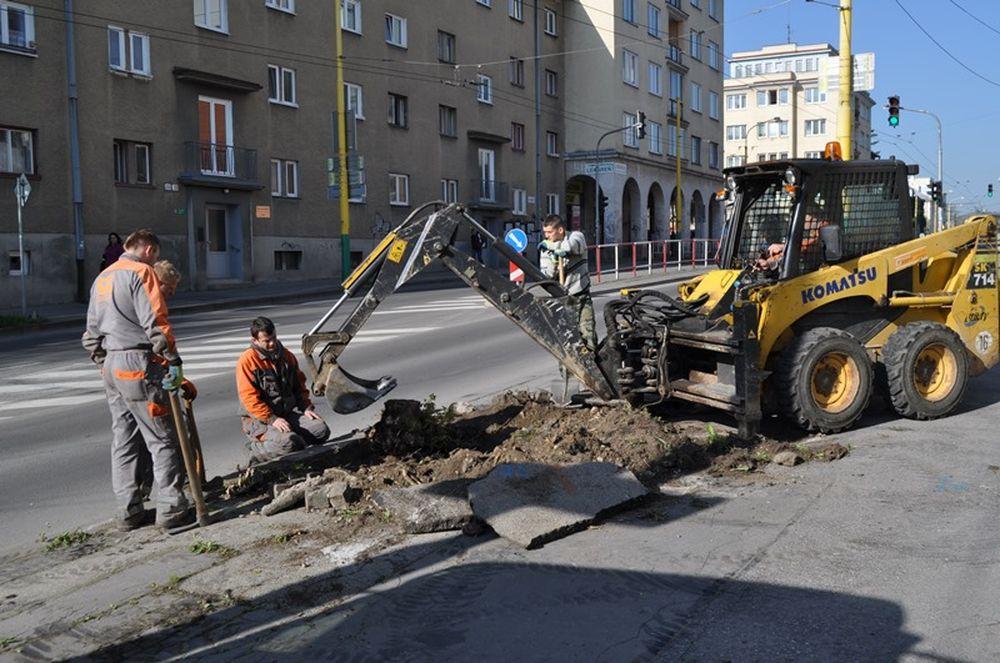 Na Veľkej okružnej ulici vzniká nové stromoradie , foto 1