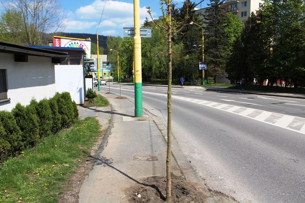 Na Veľkej okružnej ulici vzniká nové stromoradie , foto 2