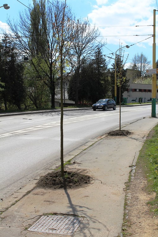Na Veľkej okružnej ulici vzniká nové stromoradie , foto 3