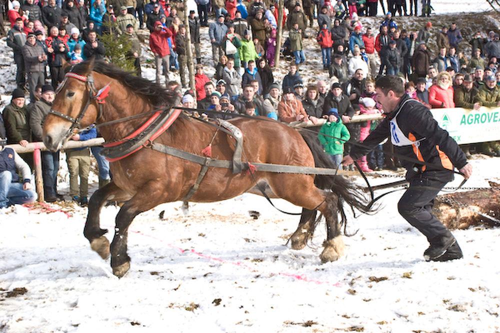 Furmánske preteky Hričovské podhradie 14. januára 2017, foto 2