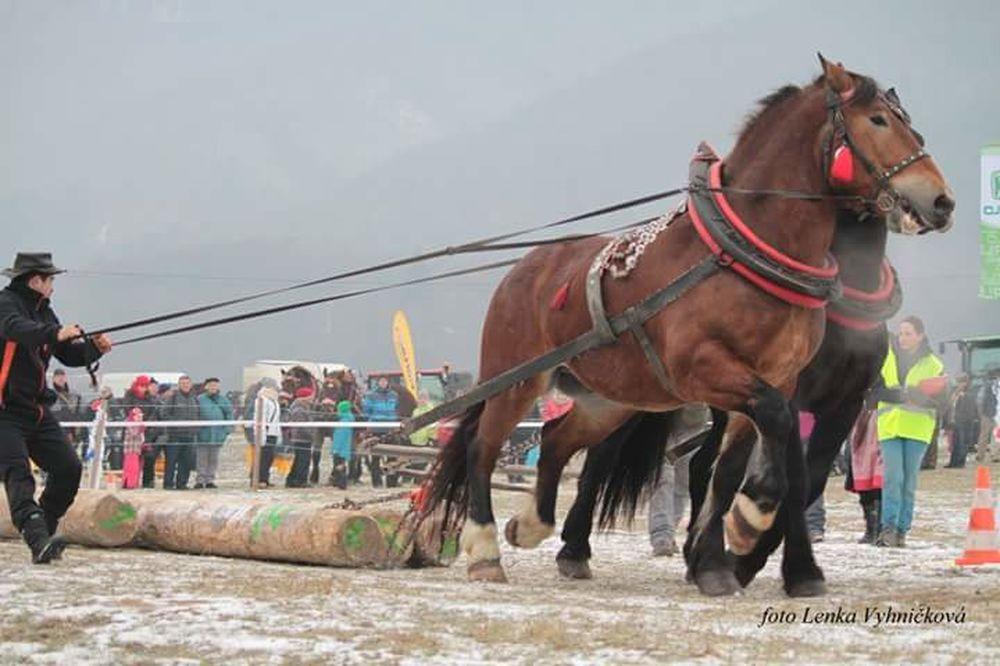 Furmánske preteky Hričovské podhradie 14. januára 2017, foto 4