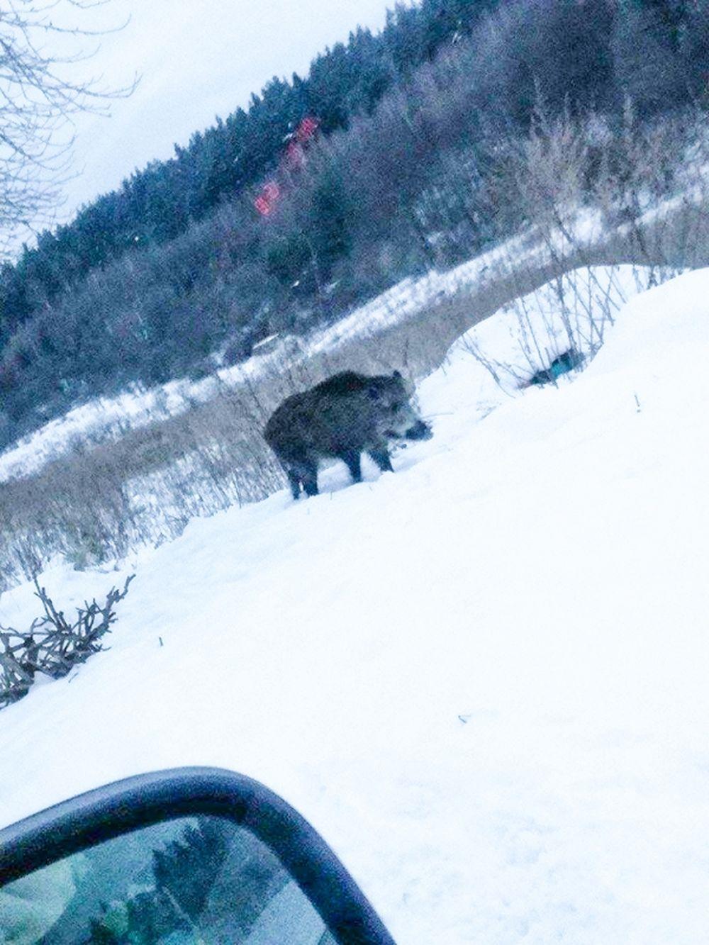Diviaky Bánovská hora 13.1.2017, foto 3