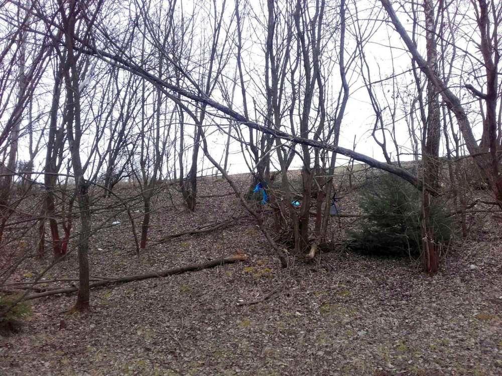 Nebezpečné stromy na sídlisku Solinky, ulica Obvodová, foto 1