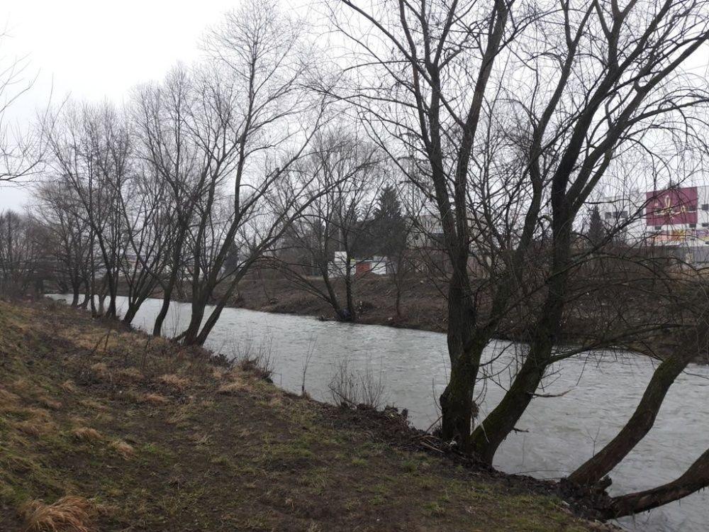 Výrub stromov v okolí Rajčanky - február 2018, foto 1