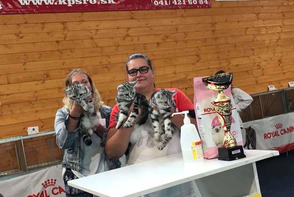 Výstava mačiek 2018 v Žiline, foto 2