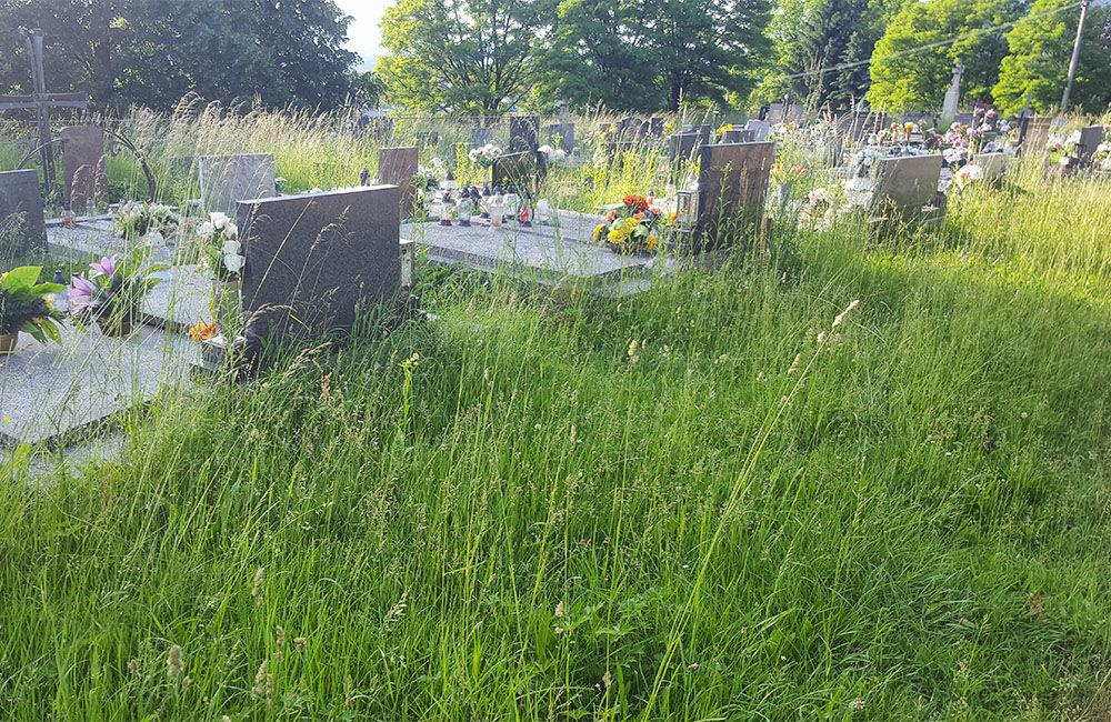 FOTO: Obyvatelia Bytčice sa na cintorínoch brodia vo vysokej tráve, ktorá sa dlhodobo nekosí, foto 3
