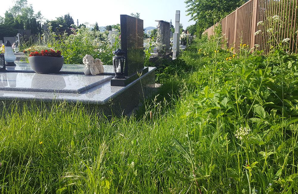 FOTO: Obyvatelia Bytčice sa na cintorínoch brodia vo vysokej tráve, ktorá sa dlhodobo nekosí, foto 2