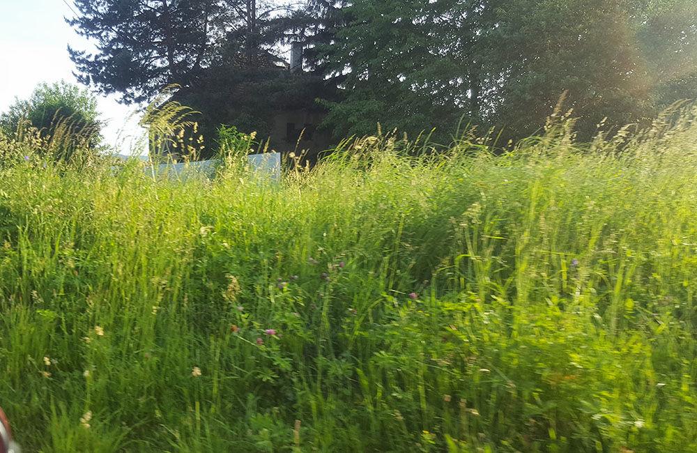 FOTO: Obyvatelia Bytčice sa na cintorínoch brodia vo vysokej tráve, ktorá sa dlhodobo nekosí, foto 5