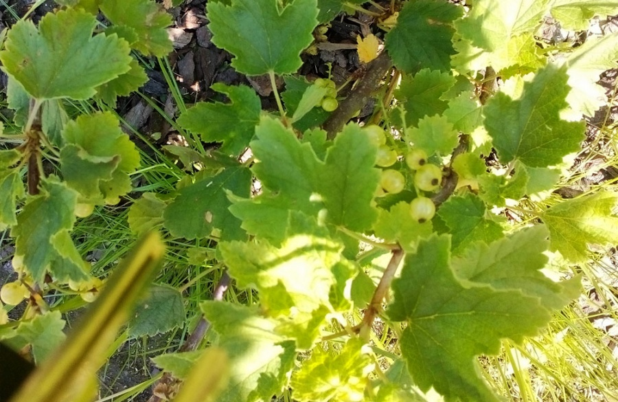 Dobšinského sad na sídlisku Vlčince má lúku z poľných kvetov aj prvé ovocie, foto 5