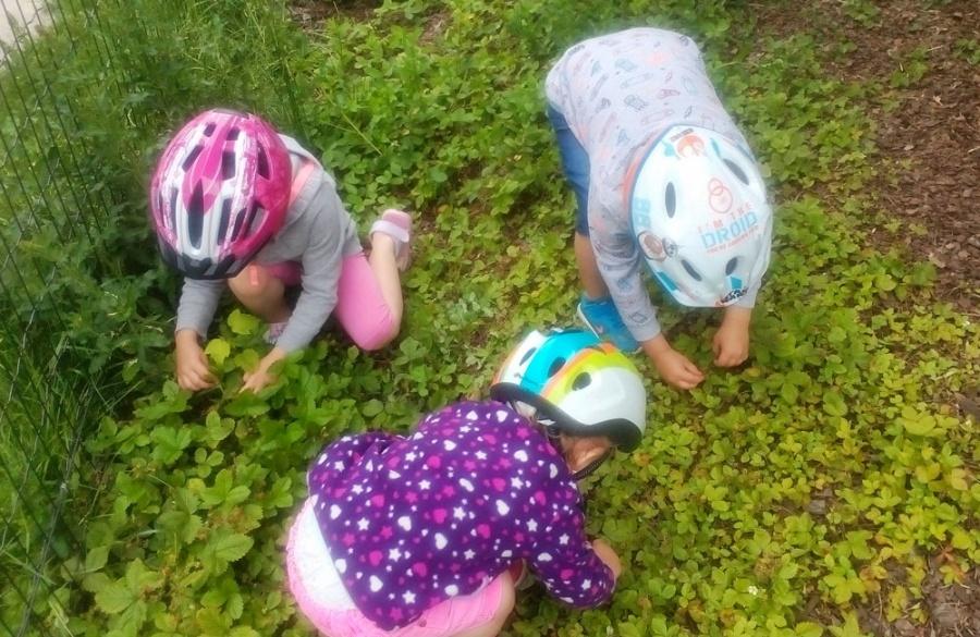 Dobšinského sad na sídlisku Vlčince má lúku z poľných kvetov aj prvé ovocie, foto 6