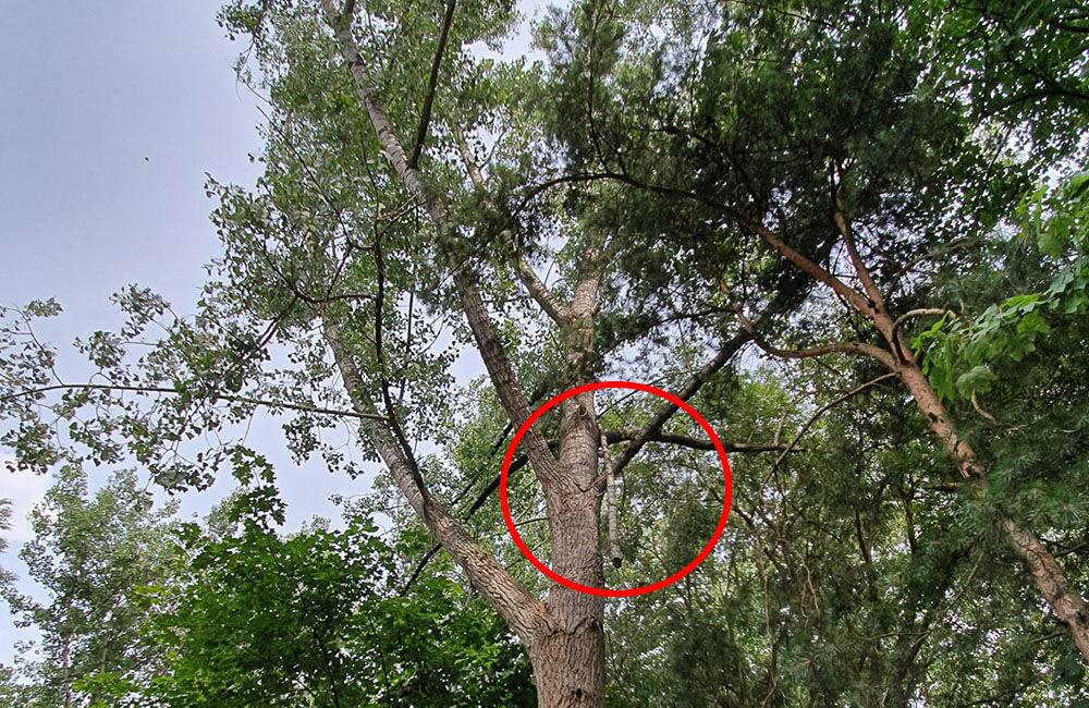 FOTO: Ľudí v parku na Rosinkách ohrozujú padajúce konáre a stromy, foto 1