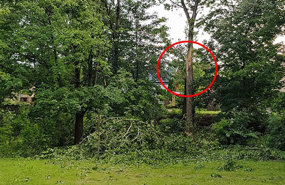 FOTO: Ľudí v parku na Rosinkách ohrozujú padajúce konáre a stromy, foto 5