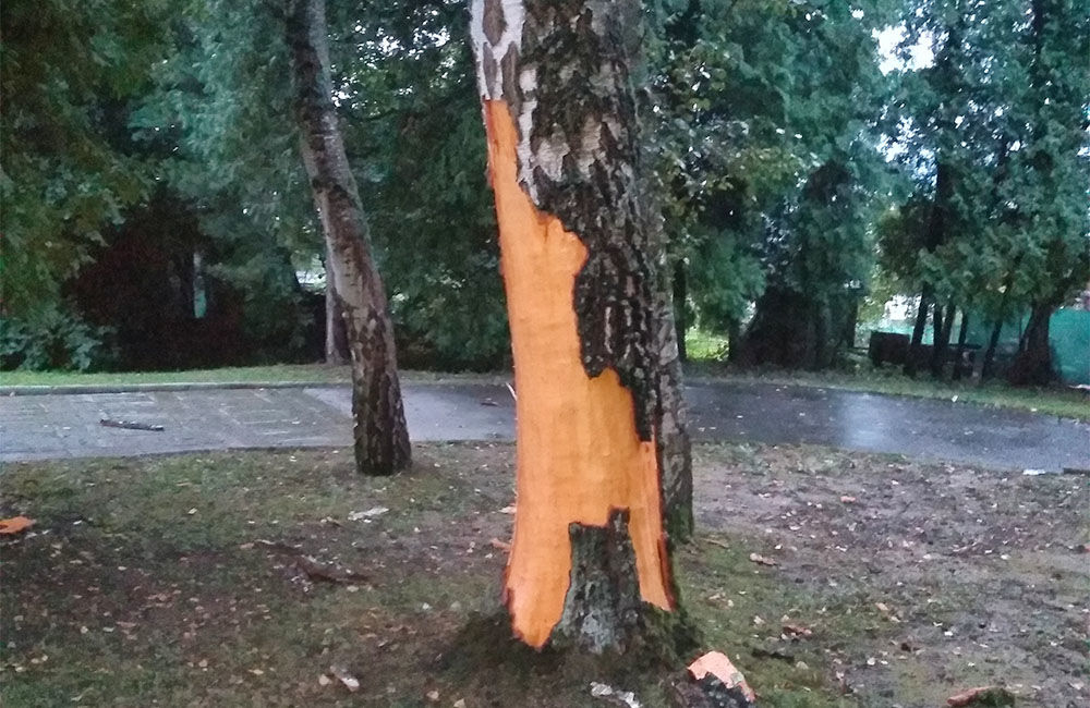 FOTO: Na vojenskom cintoríne na Bôriku udrel blesk do stromu, kôru rozmetalo po okolí, foto 1