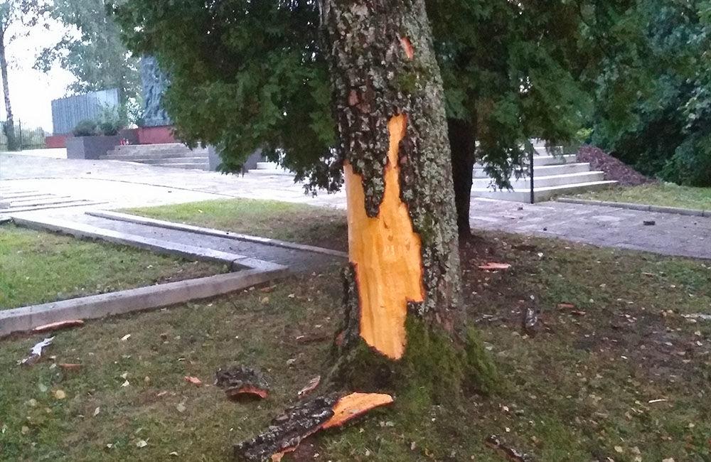 FOTO: Na vojenskom cintoríne na Bôriku udrel blesk do stromu, kôru rozmetalo po okolí, foto 4