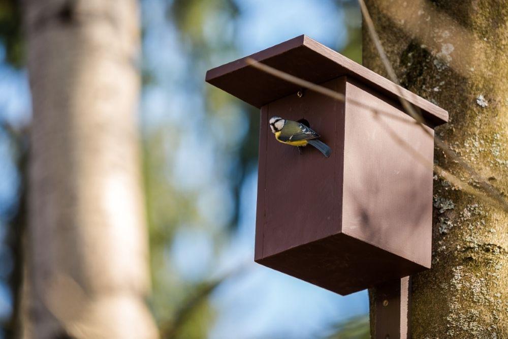 FOTO: V oddychovej zóne FRI UNIZA vybudovali ekodvor s búdkami pre vtáčiky, foto 2
