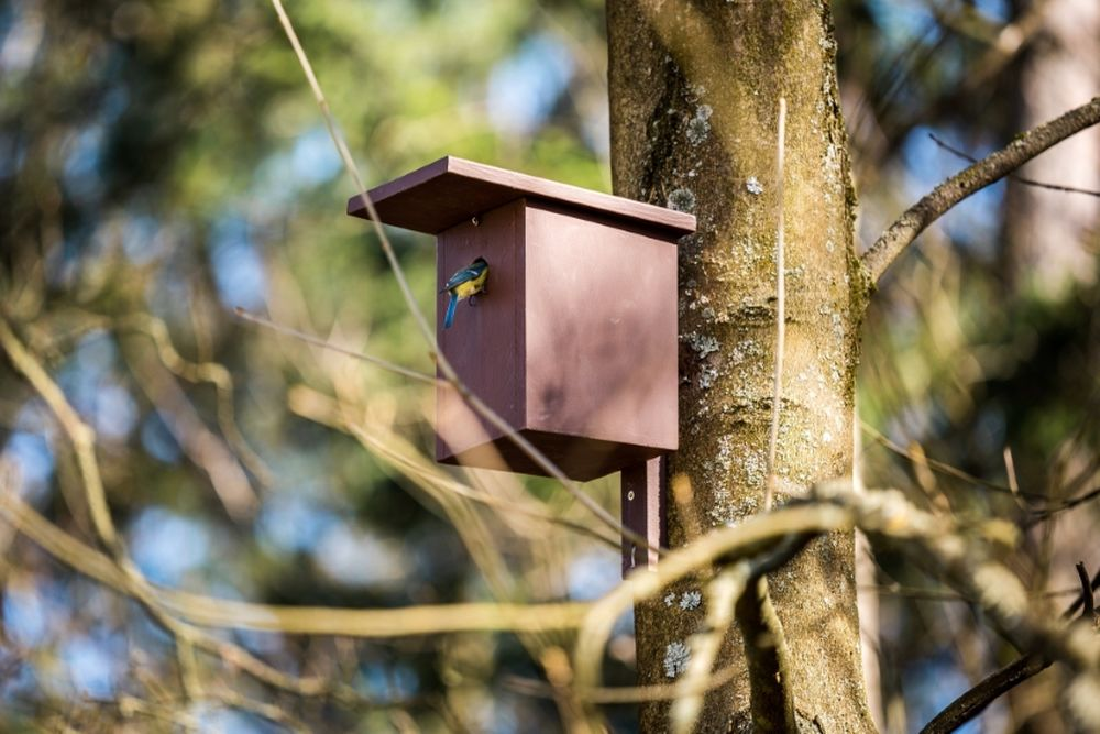 FOTO: V oddychovej zóne FRI UNIZA vybudovali ekodvor s búdkami pre vtáčiky, foto 5
