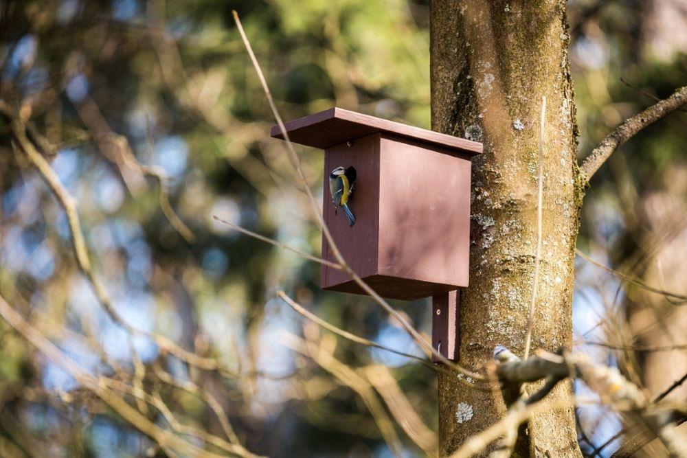 FOTO: V oddychovej zóne FRI UNIZA vybudovali ekodvor s búdkami pre vtáčiky, foto 6