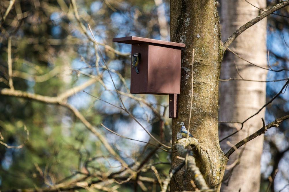 FOTO: V oddychovej zóne FRI UNIZA vybudovali ekodvor s búdkami pre vtáčiky, foto 7
