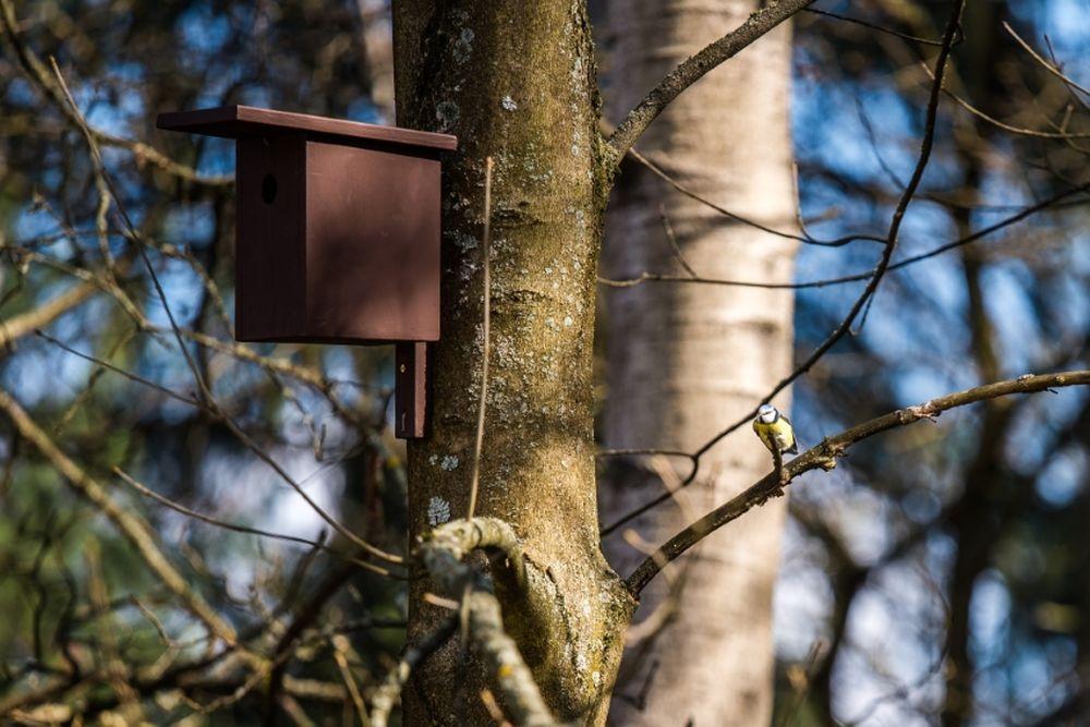 FOTO: V oddychovej zóne FRI UNIZA vybudovali ekodvor s búdkami pre vtáčiky, foto 8
