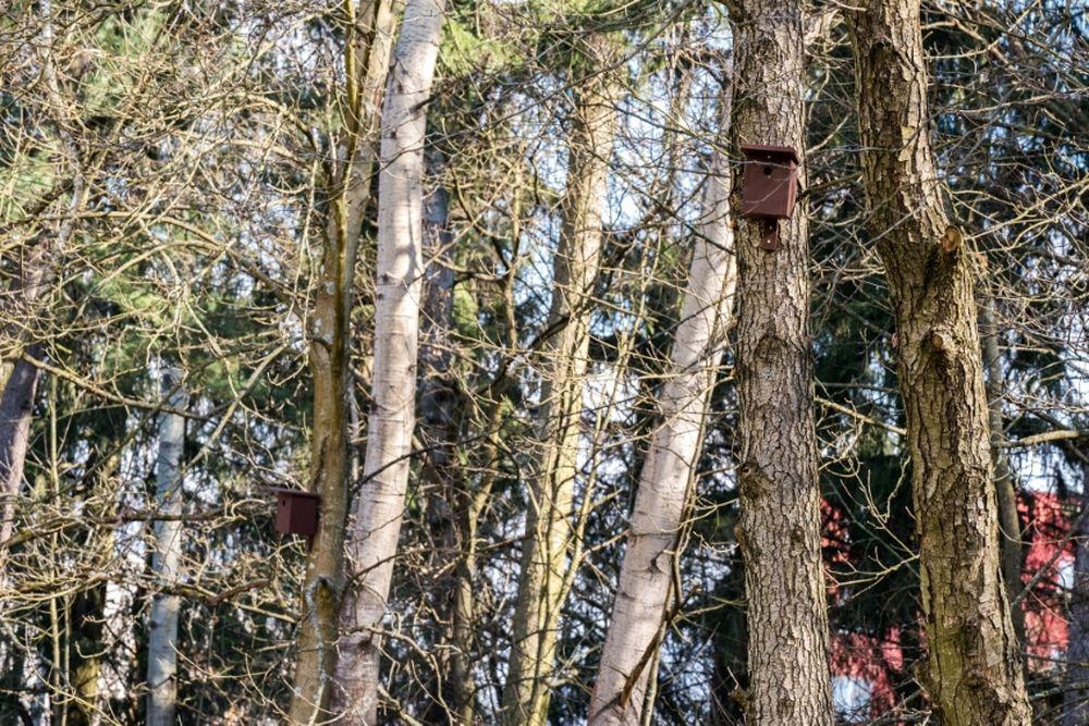 FOTO: V oddychovej zóne FRI UNIZA vybudovali ekodvor s búdkami pre vtáčiky, foto 14