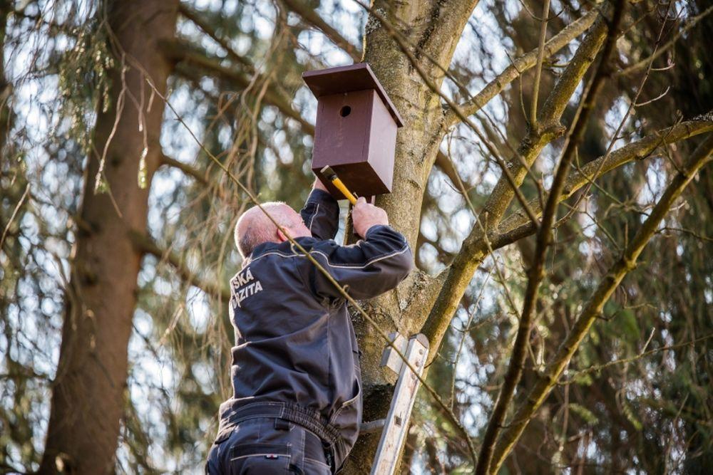 FOTO: V oddychovej zóne FRI UNIZA vybudovali ekodvor s búdkami pre vtáčiky, foto 15