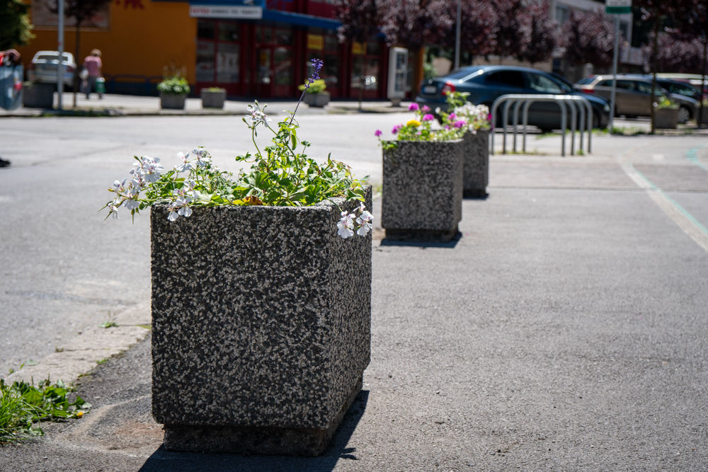 FOTO: Betónové kvetináče v centre Žiliny skrášlili vysadením trvaliek a trávy, foto 2