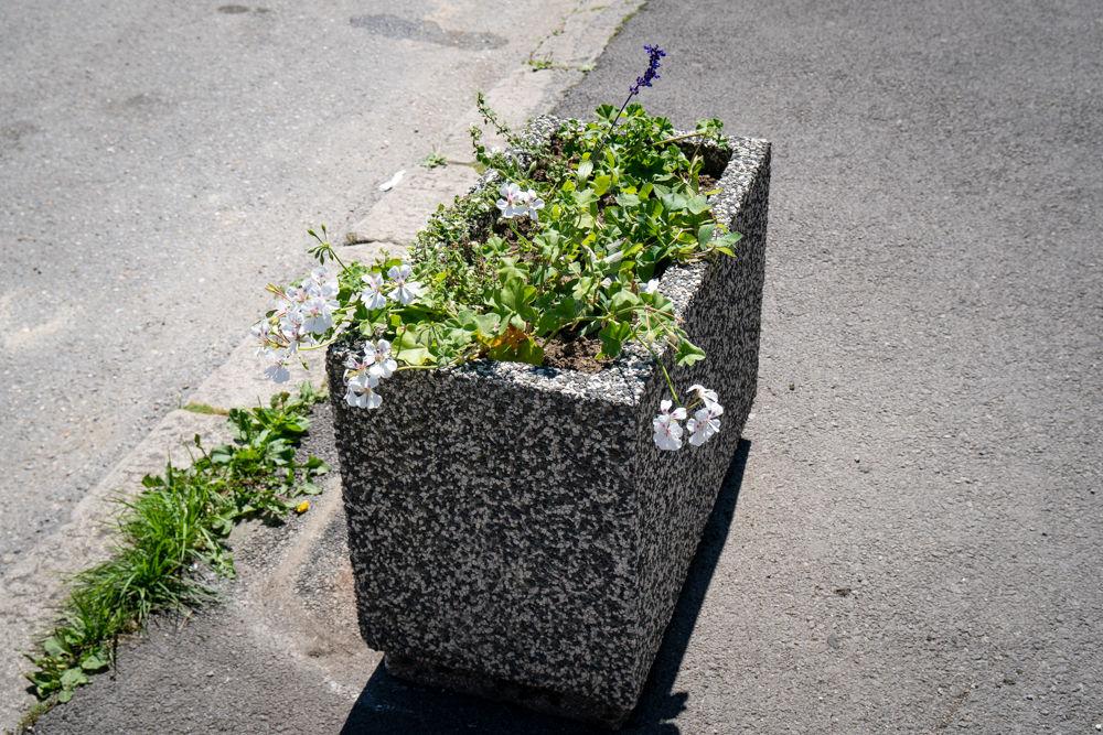 FOTO: Betónové kvetináče v centre Žiliny skrášlili vysadením trvaliek a trávy, foto 3