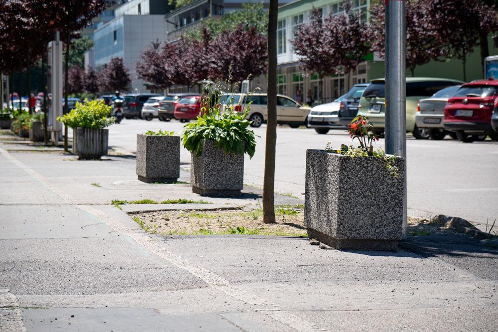 FOTO: Betónové kvetináče v centre Žiliny skrášlili vysadením trvaliek a trávy, foto 5