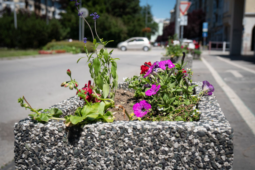 FOTO: Betónové kvetináče v centre Žiliny skrášlili vysadením trvaliek a trávy, foto 1