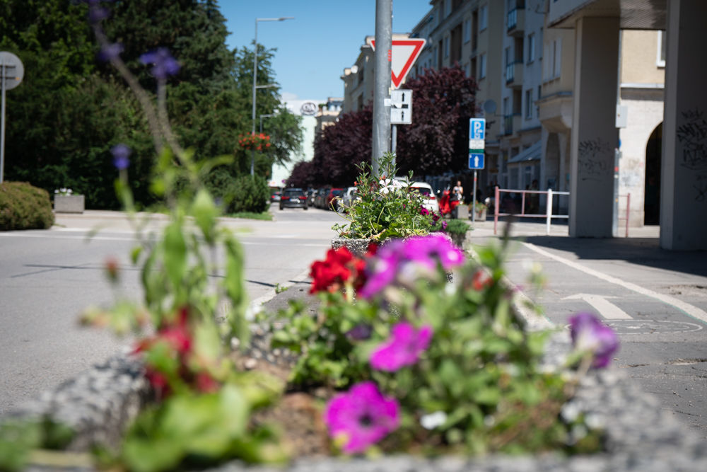 FOTO: Betónové kvetináče v centre Žiliny skrášlili vysadením trvaliek a trávy, foto 9
