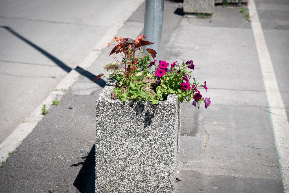 FOTO: Betónové kvetináče v centre Žiliny skrášlili vysadením trvaliek a trávy, foto 10