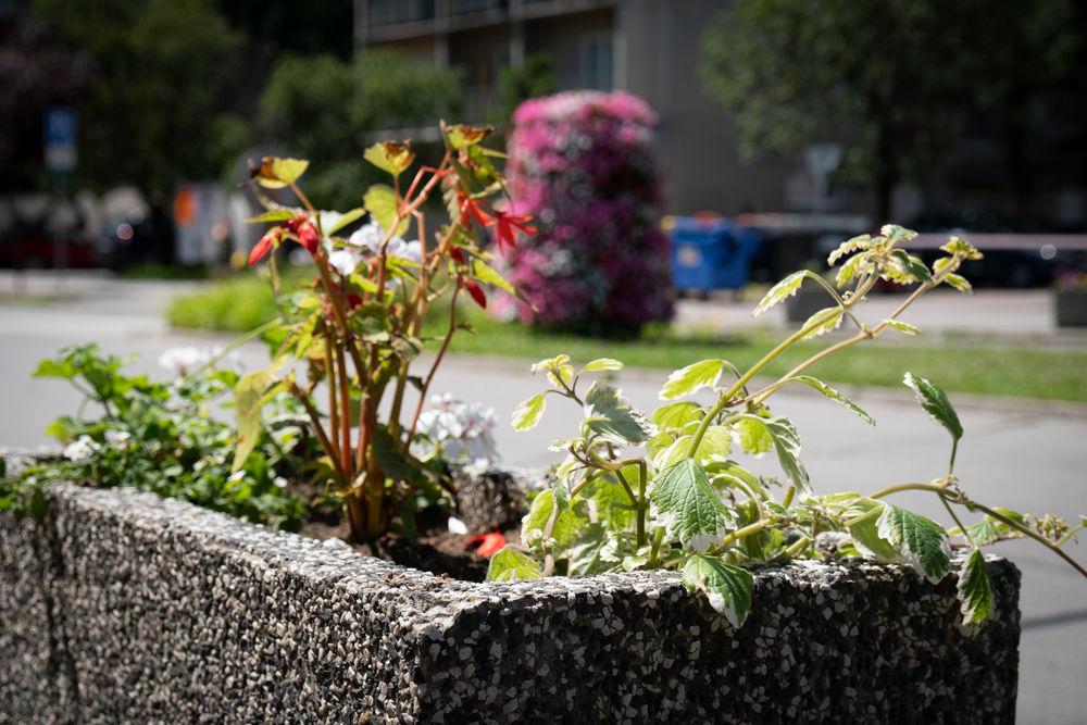 FOTO: Betónové kvetináče v centre Žiliny skrášlili vysadením trvaliek a trávy, foto 11