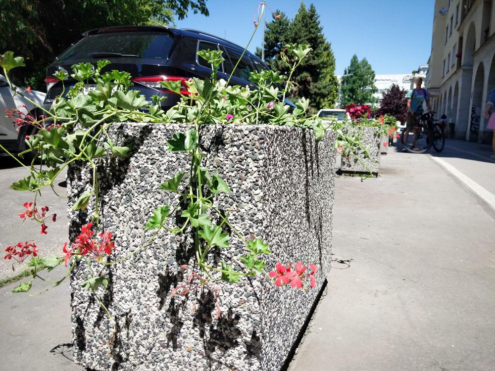 FOTO: Betónové kvetináče v centre Žiliny skrášlili vysadením trvaliek a trávy, foto 13