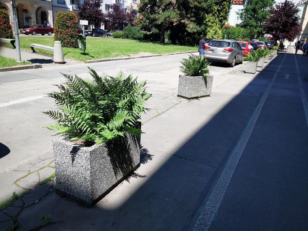 FOTO: Betónové kvetináče v centre Žiliny skrášlili vysadením trvaliek a trávy, foto 14