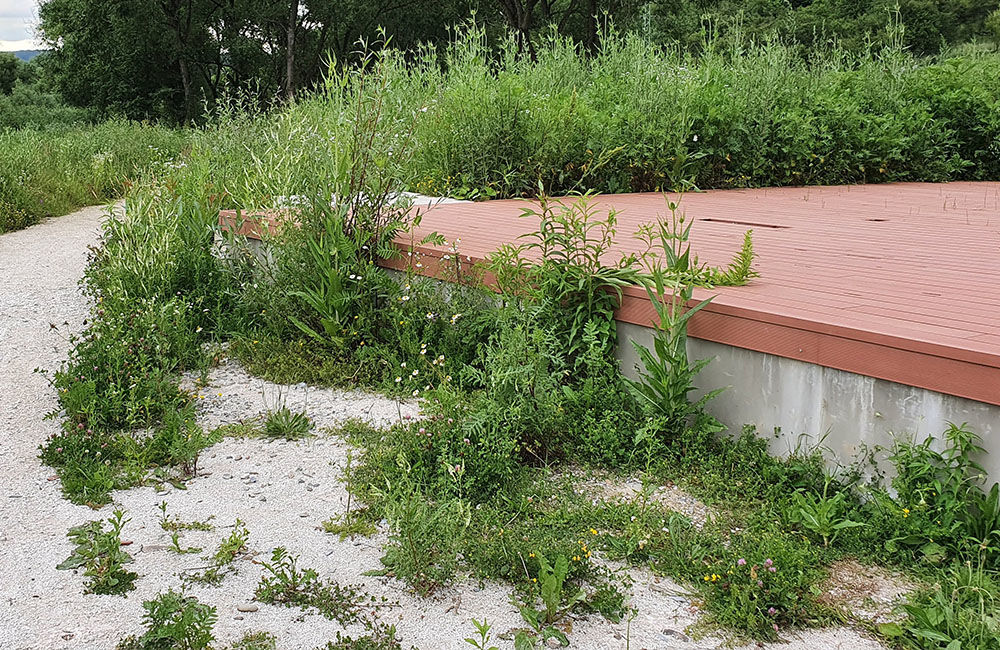 FOTO: Vysoká tráva a poškodené časti v Parku sv. Juraja v Trnovom, foto 1