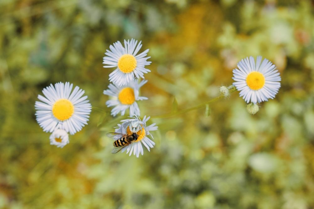 FOTO: Vo vonkajšej zóne FRI UNIZA vyhradili lúku pre motýle, foto 8