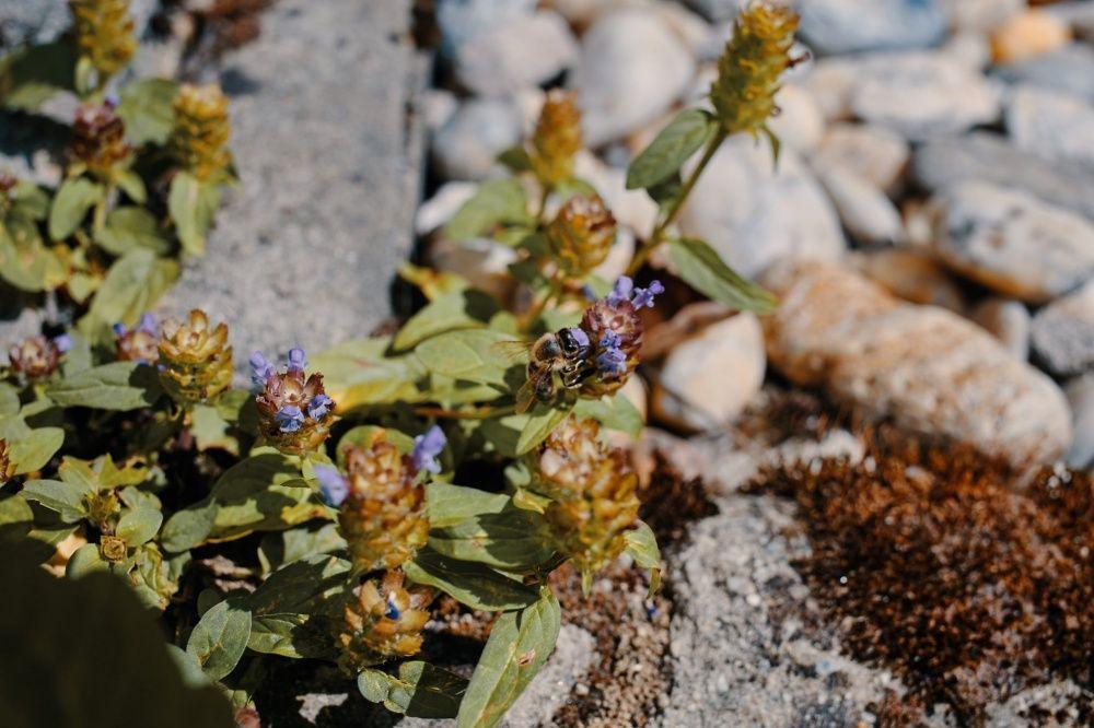 FOTO: Vo vonkajšej zóne FRI UNIZA vyhradili lúku pre motýle, foto 9