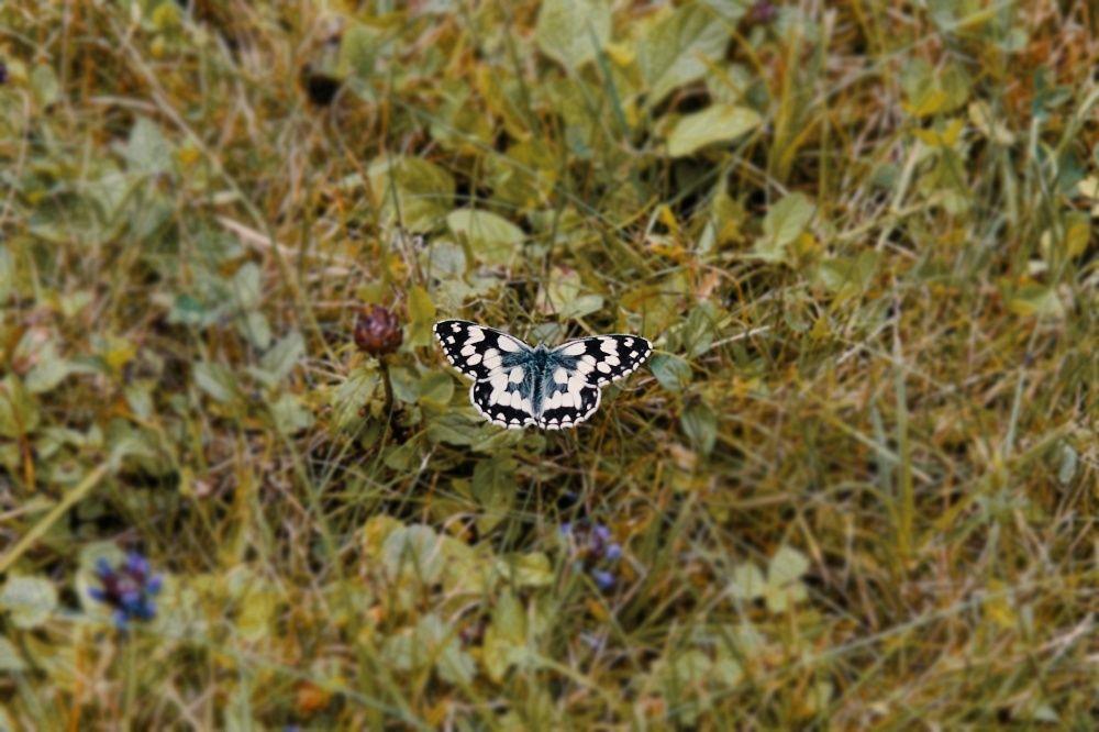 FOTO: Vo vonkajšej zóne FRI UNIZA vyhradili lúku pre motýle, foto 1