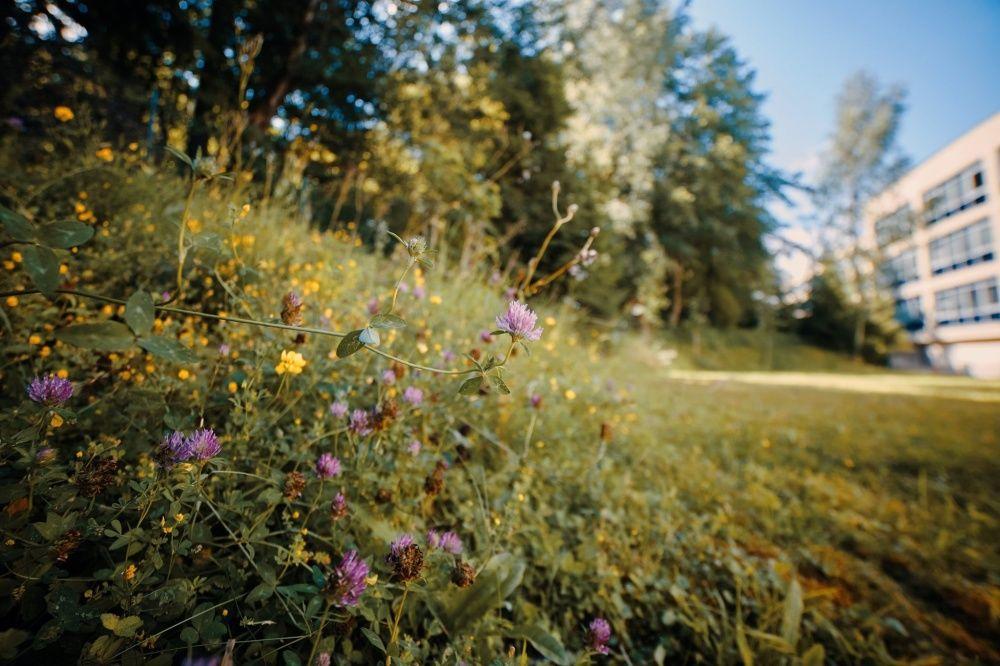 FOTO: Vo vonkajšej zóne FRI UNIZA vyhradili lúku pre motýle, foto 13