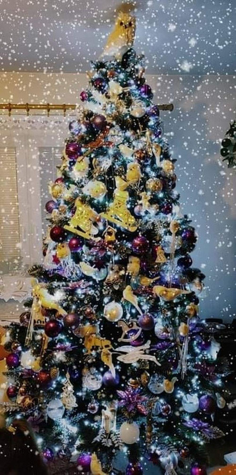 FOTO: Vianočné stromčeky v Žiline - výber fotografií našich čitateľov, foto 16