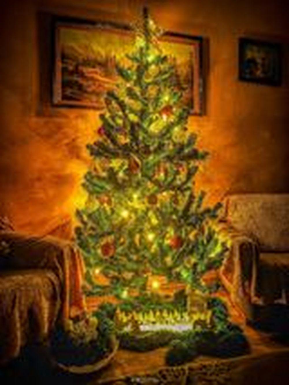 FOTO: Vianočné stromčeky v Žiline - výber fotografií našich čitateľov, foto 19