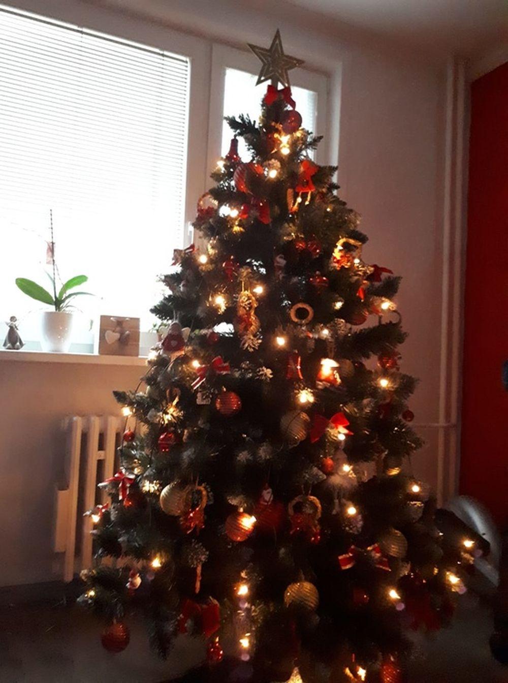 FOTO: Vianočné stromčeky v Žiline - výber fotografií našich čitateľov, foto 21