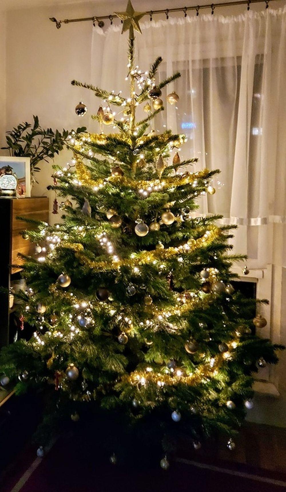 FOTO: Vianočné stromčeky v Žiline - výber fotografií našich čitateľov, foto 24