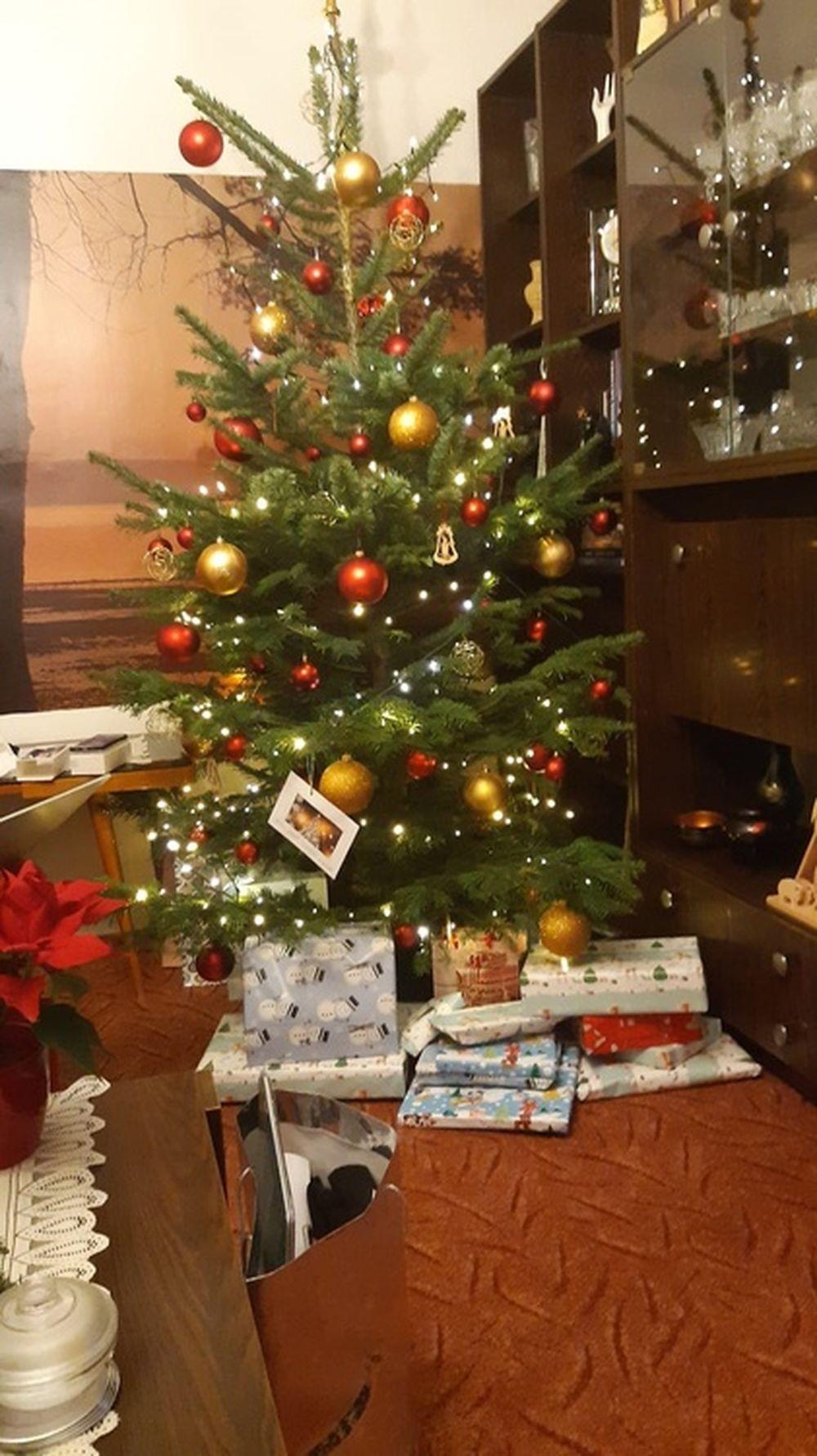 FOTO: Vianočné stromčeky v Žiline - výber fotografií našich čitateľov, foto 26
